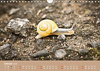 Schnecken Allerlei (Wandkalender 2019 DIN A4 quer) - Produktdetailbild 10