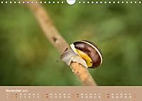 Schnecken Allerlei (Wandkalender 2019 DIN A4 quer) - Produktdetailbild 11