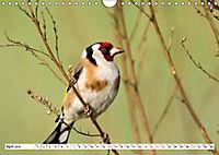 Schönheiten im Federkleid - Heimische Wildvögel im Portrait (Wandkalender 2019 DIN A4 quer) - Produktdetailbild 4