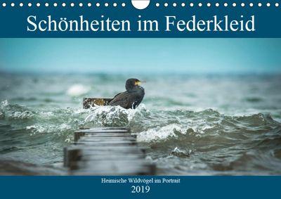 Schönheiten im Federkleid - Heimische Wildvögel im Portrait (Wandkalender 2019 DIN A4 quer), Sabine Grahneis
