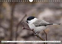 Schönheiten im Federkleid - Heimische Wildvögel im Portrait (Wandkalender 2019 DIN A4 quer) - Produktdetailbild 1