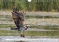 Schönheiten im Federkleid - Heimische Wildvögel im Portrait (Wandkalender 2019 DIN A4 quer) - Produktdetailbild 3