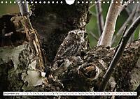 Schönheiten im Federkleid - Heimische Wildvögel im Portrait (Wandkalender 2019 DIN A4 quer) - Produktdetailbild 12