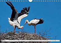 Schönheiten im Federkleid - Heimische Wildvögel im Portrait (Wandkalender 2019 DIN A4 quer) - Produktdetailbild 5