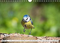 Schönheiten im Federkleid - Heimische Wildvögel im Portrait (Wandkalender 2019 DIN A4 quer) - Produktdetailbild 10