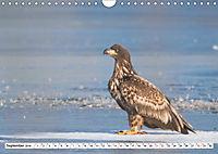 Schönheiten im Federkleid - Heimische Wildvögel im Portrait (Wandkalender 2019 DIN A4 quer) - Produktdetailbild 9