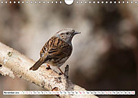 Schönheiten im Federkleid - Heimische Wildvögel im Portrait (Wandkalender 2019 DIN A4 quer) - Produktdetailbild 11