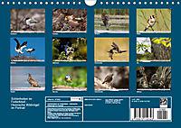 Schönheiten im Federkleid - Heimische Wildvögel im Portrait (Wandkalender 2019 DIN A4 quer) - Produktdetailbild 13