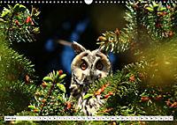 Schönheiten im Federkleid - Heimische Wildvögel im Portrait (Wandkalender 2019 DIN A3 quer) - Produktdetailbild 6