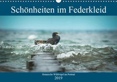 Schönheiten im Federkleid - Heimische Wildvögel im Portrait (Wandkalender 2019 DIN A3 quer), Sabine Grahneis