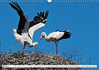 Schönheiten im Federkleid - Heimische Wildvögel im Portrait (Wandkalender 2019 DIN A3 quer) - Produktdetailbild 5