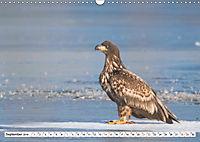 Schönheiten im Federkleid - Heimische Wildvögel im Portrait (Wandkalender 2019 DIN A3 quer) - Produktdetailbild 9