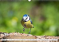 Schönheiten im Federkleid - Heimische Wildvögel im Portrait (Wandkalender 2019 DIN A3 quer) - Produktdetailbild 10