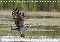 Schönheiten im Federkleid - Heimische Wildvögel im Portrait (Tischkalender 2019 DIN A5 quer) - Produktdetailbild 3