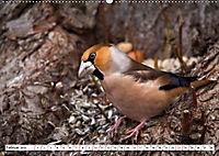 Schönheiten im Federkleid - Heimische Wildvögel im Portrait (Wandkalender 2019 DIN A2 quer) - Produktdetailbild 2