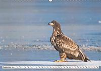 Schönheiten im Federkleid - Heimische Wildvögel im Portrait (Wandkalender 2019 DIN A2 quer) - Produktdetailbild 9