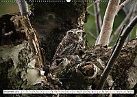 Schönheiten im Federkleid - Heimische Wildvögel im Portrait (Wandkalender 2019 DIN A2 quer) - Produktdetailbild 12