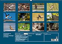 Schönheiten im Federkleid - Heimische Wildvögel im Portrait (Wandkalender 2019 DIN A2 quer) - Produktdetailbild 13