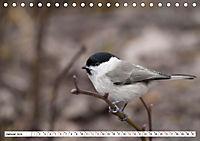 Schönheiten im Federkleid - Heimische Wildvögel im Portrait (Tischkalender 2019 DIN A5 quer) - Produktdetailbild 1