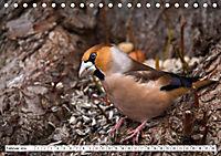 Schönheiten im Federkleid - Heimische Wildvögel im Portrait (Tischkalender 2019 DIN A5 quer) - Produktdetailbild 2