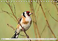 Schönheiten im Federkleid - Heimische Wildvögel im Portrait (Tischkalender 2019 DIN A5 quer) - Produktdetailbild 4