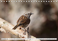Schönheiten im Federkleid - Heimische Wildvögel im Portrait (Tischkalender 2019 DIN A5 quer) - Produktdetailbild 11