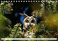 Schönheiten im Federkleid - Heimische Wildvögel im Portrait (Tischkalender 2019 DIN A5 quer) - Produktdetailbild 6