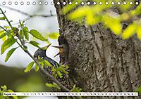 Schönheiten im Federkleid - Heimische Wildvögel im Portrait (Tischkalender 2019 DIN A5 quer) - Produktdetailbild 8