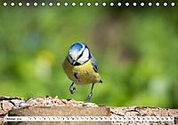 Schönheiten im Federkleid - Heimische Wildvögel im Portrait (Tischkalender 2019 DIN A5 quer) - Produktdetailbild 10