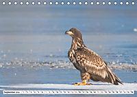 Schönheiten im Federkleid - Heimische Wildvögel im Portrait (Tischkalender 2019 DIN A5 quer) - Produktdetailbild 9
