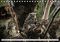 Schönheiten im Federkleid - Heimische Wildvögel im Portrait (Tischkalender 2019 DIN A5 quer) - Produktdetailbild 12