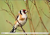 Schönheiten im Federkleid - Heimische Wildvögel im Portrait (Wandkalender 2019 DIN A2 quer) - Produktdetailbild 4