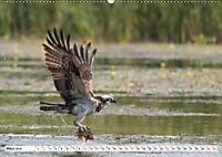 Schönheiten im Federkleid - Heimische Wildvögel im Portrait (Wandkalender 2019 DIN A2 quer) - Produktdetailbild 3