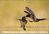 Schönheiten im Federkleid - Heimische Wildvögel im Portrait (Wandkalender 2019 DIN A2 quer) - Produktdetailbild 7