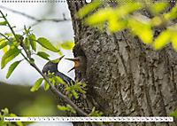 Schönheiten im Federkleid - Heimische Wildvögel im Portrait (Wandkalender 2019 DIN A2 quer) - Produktdetailbild 8