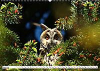 Schönheiten im Federkleid - Heimische Wildvögel im Portrait (Wandkalender 2019 DIN A2 quer) - Produktdetailbild 6