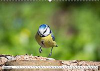 Schönheiten im Federkleid - Heimische Wildvögel im Portrait (Wandkalender 2019 DIN A2 quer) - Produktdetailbild 10