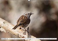 Schönheiten im Federkleid - Heimische Wildvögel im Portrait (Wandkalender 2019 DIN A2 quer) - Produktdetailbild 11