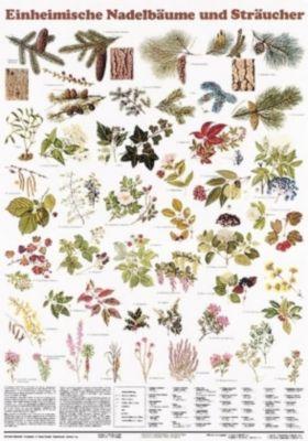 Schreiber Naturtafeln: Einheimische Nadelbäume und Sträucher