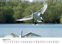 Schwäne im FlugCH-Version (Wandkalender 2019 DIN A4 quer) - Produktdetailbild 8