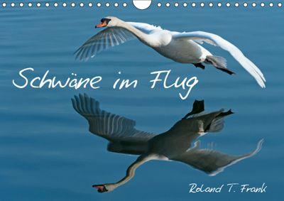 Schwäne im FlugCH-Version (Wandkalender 2019 DIN A4 quer), Roland T. Frank