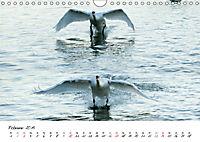 Schwäne im FlugCH-Version (Wandkalender 2019 DIN A4 quer) - Produktdetailbild 2