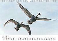 Schwäne im FlugCH-Version (Wandkalender 2019 DIN A4 quer) - Produktdetailbild 3