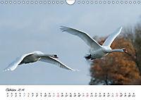 Schwäne im FlugCH-Version (Wandkalender 2019 DIN A4 quer) - Produktdetailbild 10