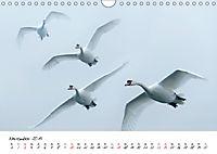 Schwäne im FlugCH-Version (Wandkalender 2019 DIN A4 quer) - Produktdetailbild 11