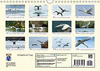 Schwäne im FlugCH-Version (Wandkalender 2019 DIN A4 quer) - Produktdetailbild 13