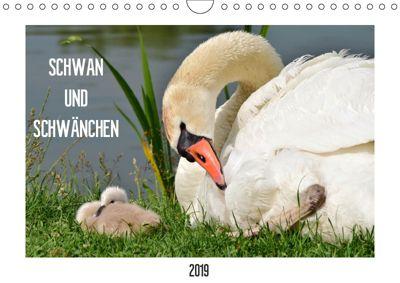 SCHWAN UND SCHWÄNCHEN (Wandkalender 2019 DIN A4 quer), Marlise Gaudig