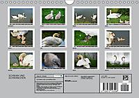 SCHWAN UND SCHWÄNCHEN (Wandkalender 2019 DIN A4 quer) - Produktdetailbild 13