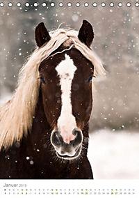 Schwarzwälder Kaltblut Pferde im Portrait (Tischkalender 2019 DIN A5 hoch) - Produktdetailbild 1