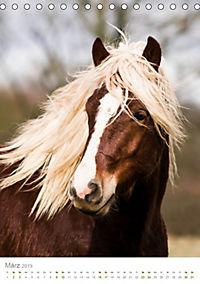 Schwarzwälder Kaltblut Pferde im Portrait (Tischkalender 2019 DIN A5 hoch) - Produktdetailbild 3